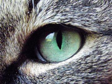 Eye of the cat van Il se