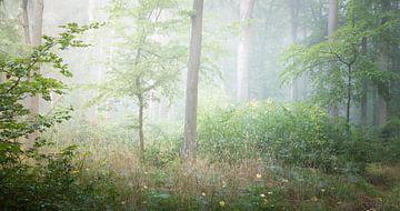 Idyllisch groen bos van Tobias Luxberg