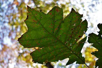 Herfstblad in de lucht van DoDiLa Foto's