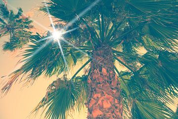 Palm van BVpix
