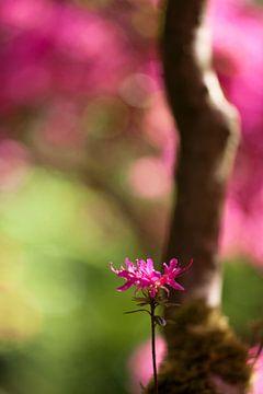 Japanese garden 4 sur Raoul Suermondt