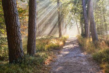 Ein strahlend Herbstmorgen von Cor de Hamer