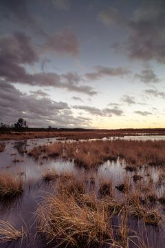 Strabrechtse Heide 184 sur Desh amer