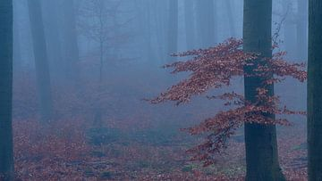 Mysterieus bos, gehuld in mist, Boom met rood/bruine bladeren.