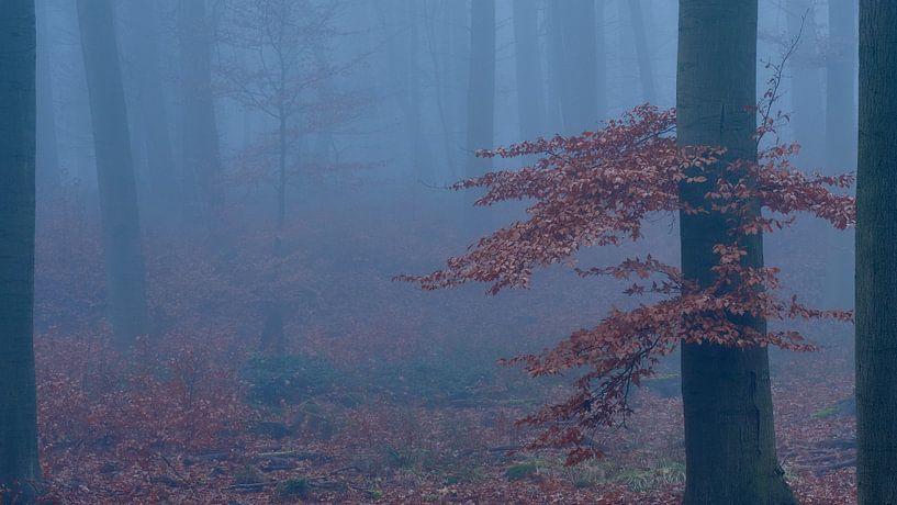 Mysterieus bos, gehuld in mist, Boom met rood/bruine bladeren. van Epic Photography