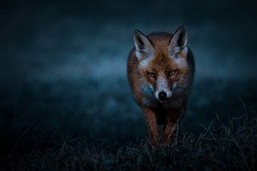 Fuchs von Peter Deschepper