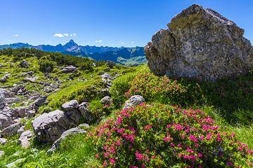 Rhododendron, Allgäu Alps van Walter G. Allgöwer