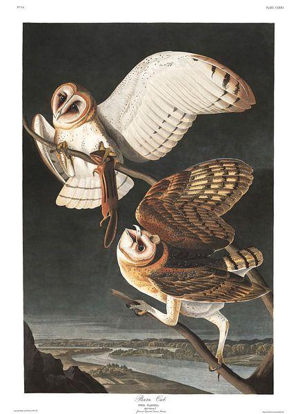 Kerkuil van Birds of America
