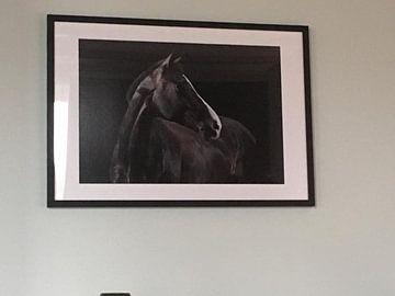 Photo de nos clients: Le cheval à son meilleur. sur Annet van Esch