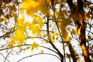 Yellow Tree van Paula van den Akker