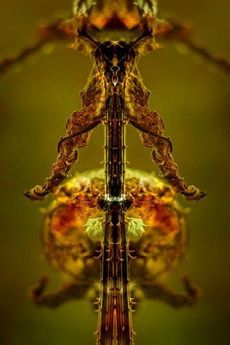 Art of nature:  Totem van Kaardenbol van