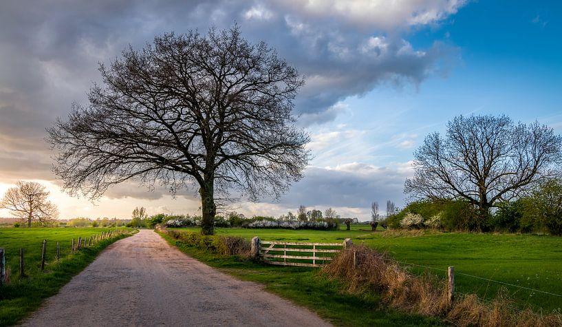 Landschap in Gorssel, de Ravenswaarden van Patrick Rodink