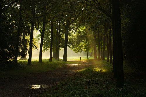 never afraid of sunlight