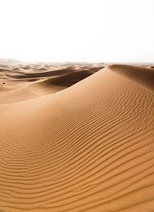 Sahara °10 sur Jesse Barendregt