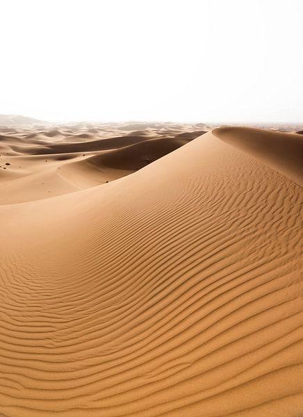 Sahara °10 von Jesse Barendregt