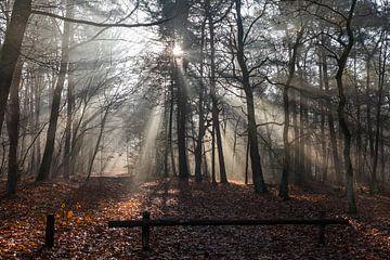 Herbst im Wald von Ger Beekes