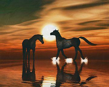 Paarden in de zonsondergang aan zee