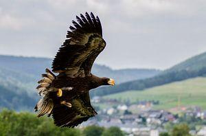 Wings of beauty