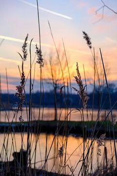 Ondergaande zon achter riet. van Lidewij Olive