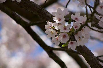Blüte von Ingrid Mooij