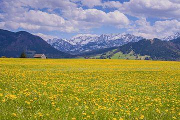 Blossoming dandelion meadow van Walter G. Allgöwer
