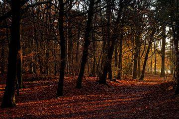Mastbos in herfstkleuren van Ronald Bruijniks