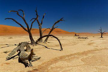 Sossusvlei Namibië (13) van Adelheid Smitt