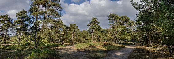 Bospaden in de lente zon van Marcel Pietersen