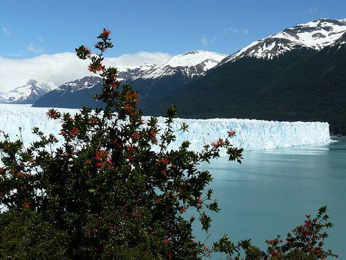 glacier 1 van
