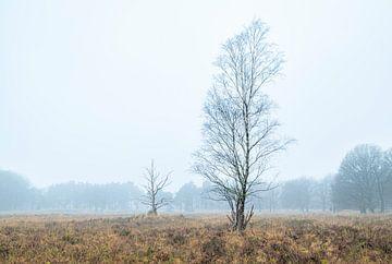 Dwingelderveld - Drenthe (Netherlands) van Marcel Kerdijk