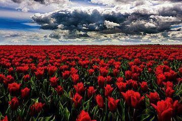 Rode Tulpen van Cho Tang