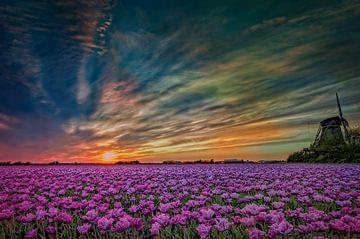 Hollands tulpen landschap  van eric van der eijk