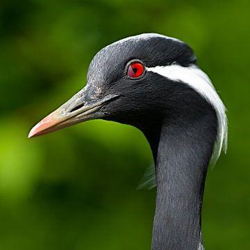 Vogel van Sandra Kuijpers