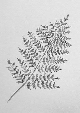 Farnblatt (Schwarz und Weiß) von Bianca ter Riet