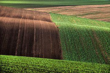Golvend landschap von Harrie Muis