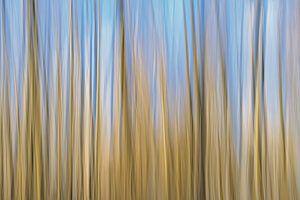 abstracte beweging in blauw en bruin van Kristof Lauwers