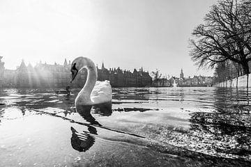 statige zwaan in zwart wit van Bert-Jan de Wagenaar