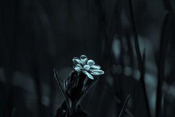 Tageskuckucksblume auf dem Feld von Frank Ketelaar