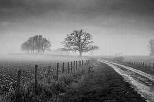 Oude Eik met mist van Chris Clinckx
