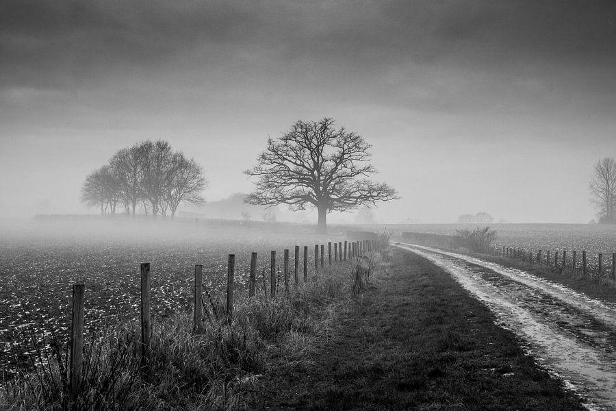 Oude Eik met mist