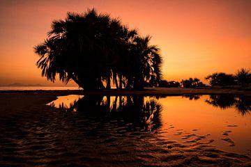 Zonsondergang op het strand met Palmboom