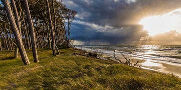 Storm op het westelijke strand van Darss van Werner Dieterich