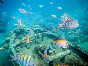 Magische onderwater wereld van Jack Soffers
