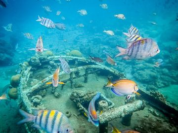 Magische onderwater wereld