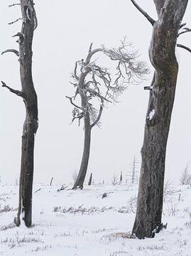 Gardiens de la glace sur Joris Pannemans - Loris Photography