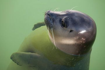 baby-zeehondjes van ad vermeulen