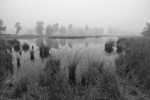 Vennen landschap in zwart wit van
