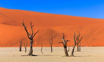 Das schöne Sossusvlei in Namibia (Afrika). von Claudio Duarte