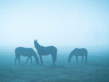 Pferde im Nebel (blau) von Roelof Nijholt