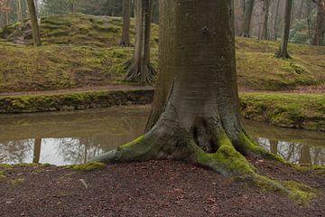 Bomen  van PPS Fotografie